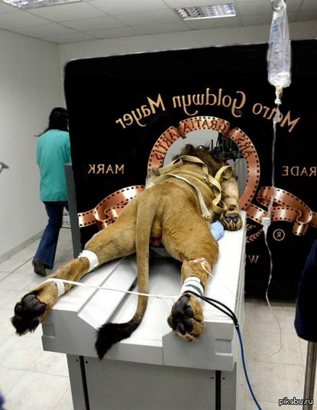 Kamukép az MGM oroszlánjáról