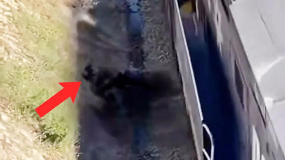 TikTok videó kutyamentés vonat