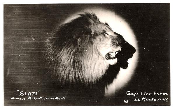 Slats nevű MGM-oroszlán