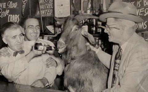 Billy kecske Chicagóban