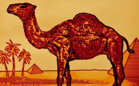 Meztelen férfi a Camel logóban