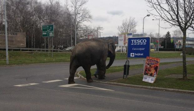 elefant_tesco