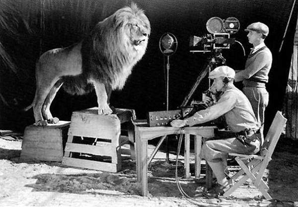 MGM logó felvétele az oroszlánnal