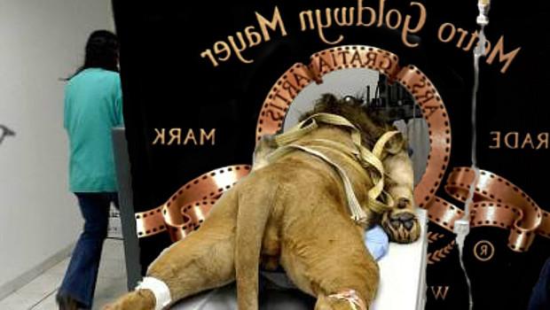 MGM oroszlán az asztalon