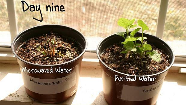 Mikrózott növények
