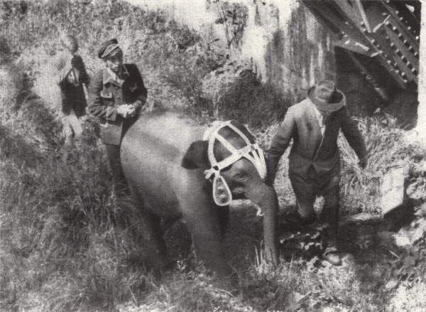 Elefánt Wuppertalban